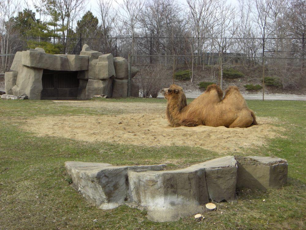zoo-03.jpg